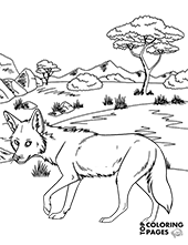 Coyote on steppes of Africa